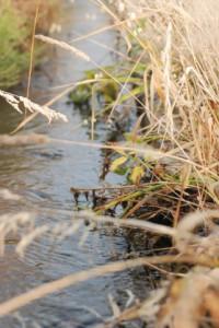 鯰、用水路