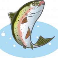 用水路でニジマスを釣る