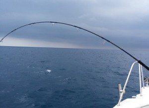 シイラのルアー釣り
