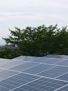 太陽光発電所に動物が入って故障