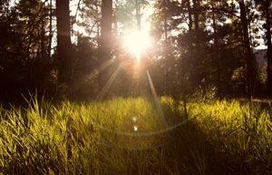 太陽光発電の枯葉剤で森がなくなる。