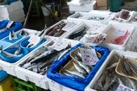 魚市場で野菜と魚を安く買う
