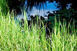 毒がある野草を判断、苦いものは毒