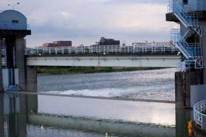 ボラは、川の中流、淡水のえん堤、ダム下に大量に群れている