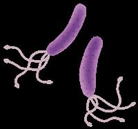 ピロリ菌ヘリコバクターの検査が安い