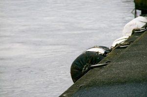 岸壁でカニを釣る