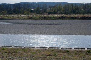 流れがあるポイントでウグイ、オイカワを釣る