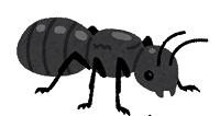 アリを食べる