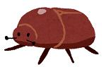 カブトムシ、カナブンのお腹の部分を食べる