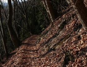 朽ち木の中にクワガタがいる