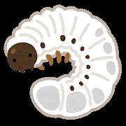 カブトムシ、カナブンの幼虫は泥や糞の臭いがしてまずい