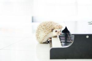ピアノ演奏者を撮影して稼ぐ