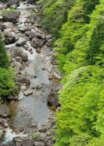 渓流でヨシノボリを捕る